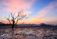 Дерево баланса на море Стоковое Фото