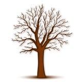 Дерево без вектора листьев Стоковое Изображение RF
