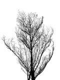 Дерево без изолированного силуэта листьев Стоковое Изображение