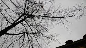 Дерево без листьев в осени Стоковые Фото