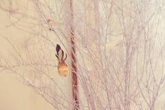 Птицы на ветвях Стоковые Фотографии RF