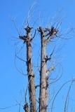 Дерево без листьев Стоковые Изображения RF