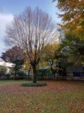 Дерево без листьев стоковая фотография rf