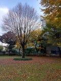 Дерево без листьев стоковые фотографии rf