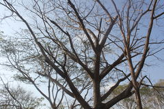 Дерево без листьев Стоковое Фото