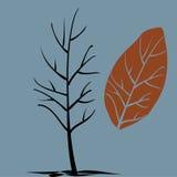 Дерево без кроны в последней осени Стоковые Изображения