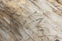Дерево без расшивы Стоковое Изображение RF