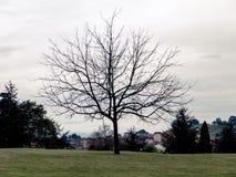Дерево без силуэта листьев Стоковая Фотография RF