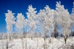 Дерево березы в снеге стоковые фотографии rf