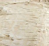 Дерево березы Стоковое Изображение RF