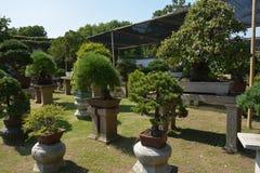 Дерево бонзаев в саде Строка деревьев бонзаев стоковая фотография