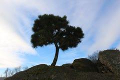 Дерево бонзаев против голубого неба Стоковая Фотография RF