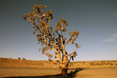 Дерево ботинка Стоковые Изображения