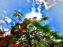 Дерево боярышника в самом большом университетском кампусе Стоковое Изображение
