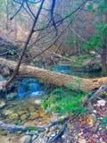 Дерево более громко после этого мочит Стоковое Изображение