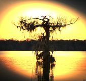 Дерево болота t Стоковое Изображение RF