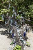 Дерево бутылки ликера на St Китс стоковое фото