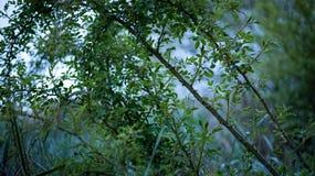Дерево Буша Стоковые Фотографии RF