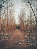 Дерево бульвара Стоковая Фотография