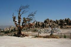 Дерево вазы стоковые фотографии rf