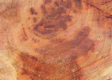 Дерево валить в лесе Стоковое Изображение