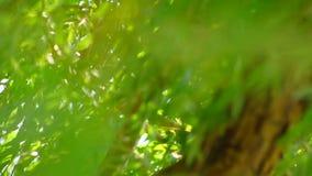 Дерево вербы двигая в ветер одичало видеоматериал