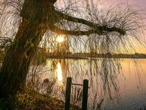 Дерево вербы на портовом районе во время захода солнца Стоковые Изображения RF