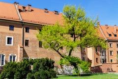 Дерево весны зеленое перед старым зданием на замке Wawel, Crac Стоковое Изображение RF