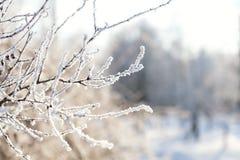 Дерево ветви в снеге Стоковые Фотографии RF