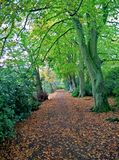 Дерево Великобритании Стоковая Фотография RF