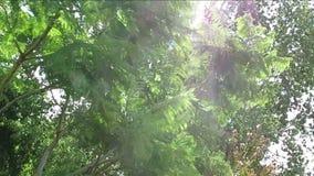 Дерево двигая с ветром видеоматериал