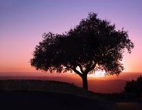 Дерево винтовой линии Mt на заходе солнца Стоковое Фото