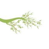 Дерево вишневых цветов Стоковое Изображение