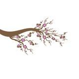 Дерево вишневых цветов Стоковая Фотография