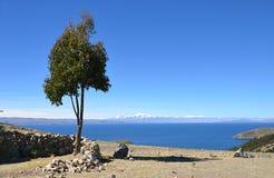 Дерево Вид на озеро Titicaca стоковые изображения rf