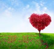 Дерево влюбленности Стоковое Фото