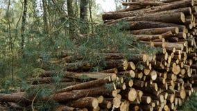 Дерево вносит дальше лес в журнал в национальном парке De Hoge Veluwe стоковое изображение