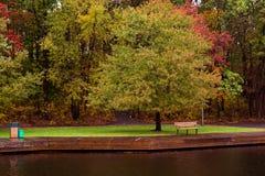 Дерево водой Стоковые Изображения