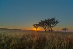 Дерево восхода солнца Стоковые Фото