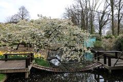 Дерево вполне цветений около моста над прудом стоковые изображения rf