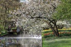 Дерево вполне цветений с тюльпанами и narcissus под близко стоковое фото