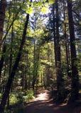 Дерево выровняло путь на пляже Rathtrevor, Parksville, ДО РОЖДЕСТВА ХРИСТОВА Стоковые Изображения