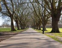 Дерево выровняло тропу между общим середины лета и кулачком Иисуса зеленым Стоковые Изображения
