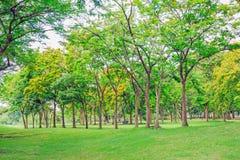 Дерево выровнянное на траве в парке Стоковые Фото