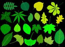 Дерево выходит комплект зеленого цвета, иллюстрация вектора