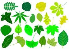 Дерево выходит комплект зеленого цвета, иллюстрация штока