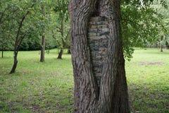 Дерево в ботаническом саде Стоковое Фото