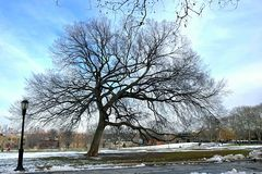 Дерево в Бруклине стоковая фотография rf