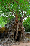 Дерево в виске Стоковые Фото