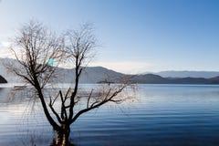 Дерево в воде Стоковая Фотография